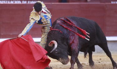 bull july 4