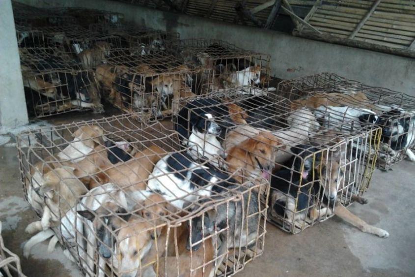 Hunde-Korea