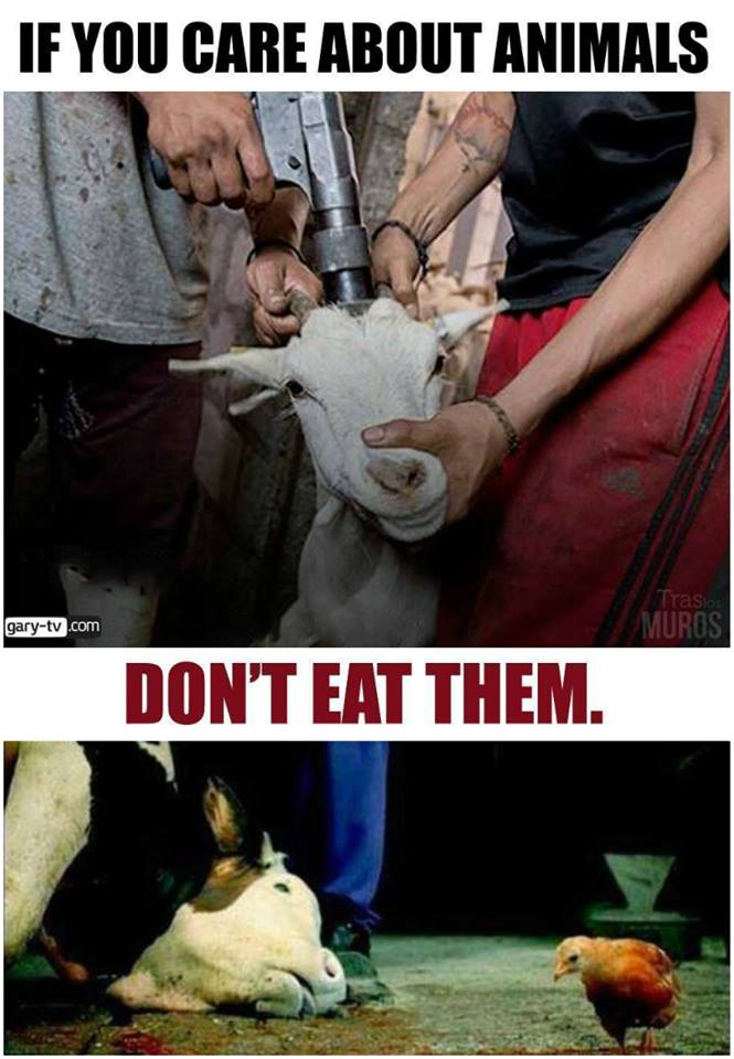 If you care about animals don`t eat them_n