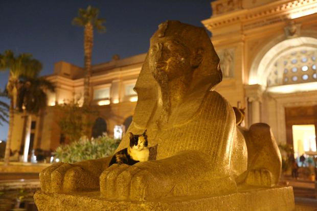 Katze auf einer Sphynx in Kairo