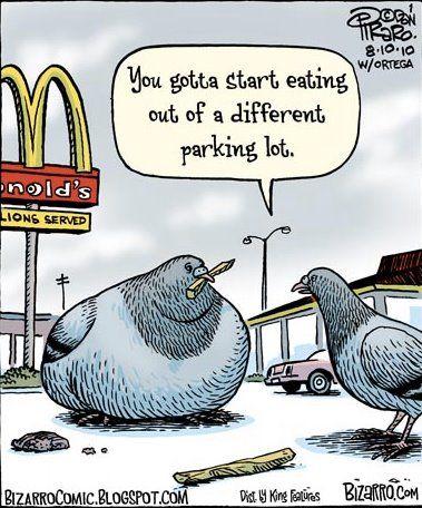 mac pigeons