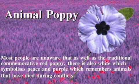purple poppy 3