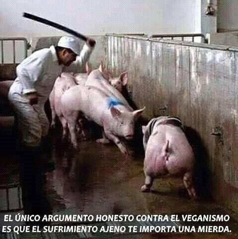 Schönes Zitat über Contra veganismus_n