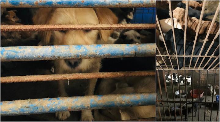 Schlachthof von Hunde in Chinajpg