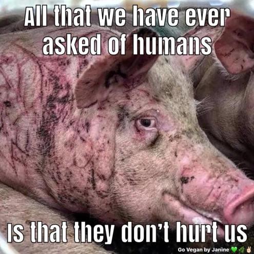 Slogan mit Schwein_n
