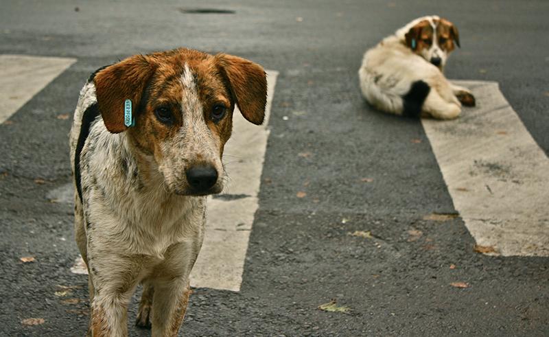 Streune Hunde in Ägyptenjpg