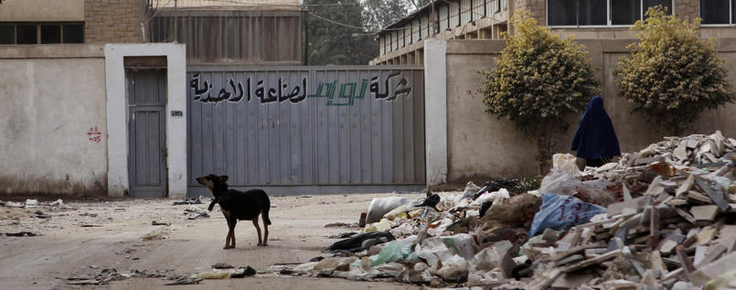 Streune in Kairopg