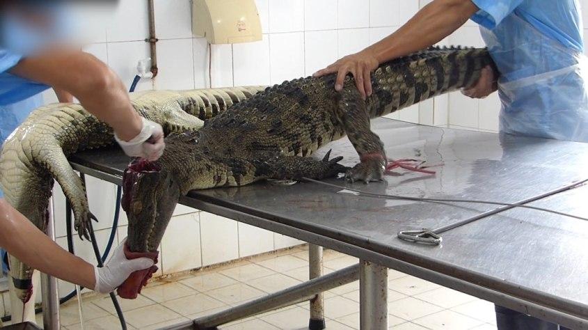 2016-03-17-Hoa-Ca-Krokodil-Schlachthaus-Saigon-Vietnam-Screenshot-1-c-PETA-D