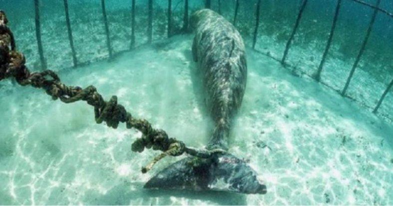 Whale prison Russia