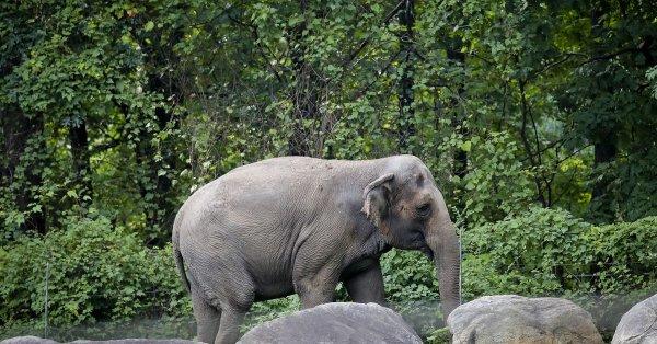 elefant-Happy jpg