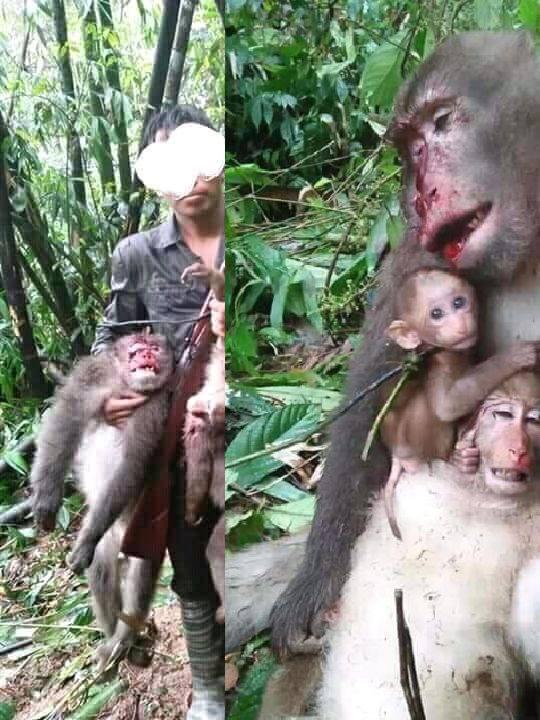 getötete Affenmuter mit Kinder_n
