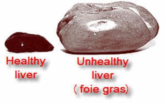 liver-foie-gras-bigger