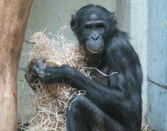 billi zoo wuppertel 3pg