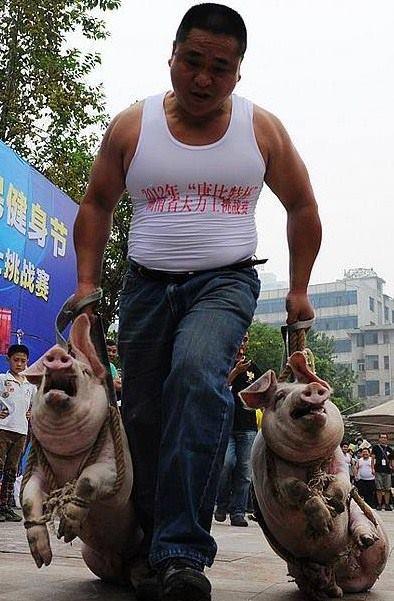 das china schweinjahr hat begonnenn