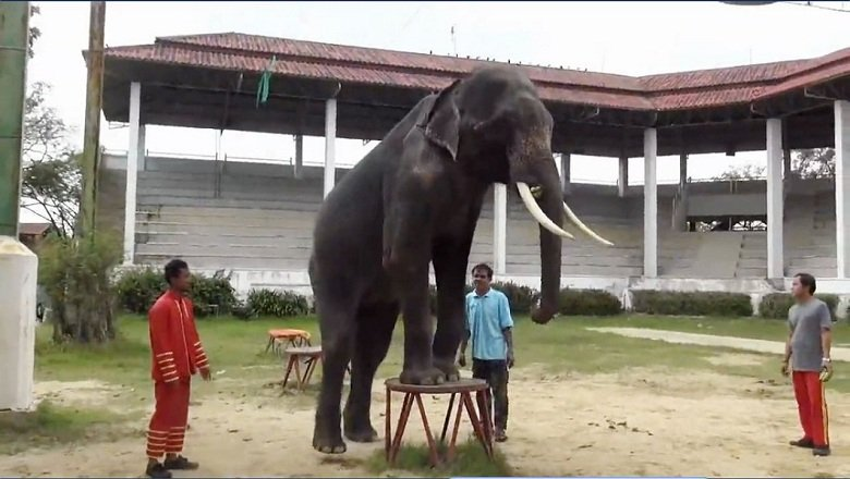 elefant-als attraktion in thai zoopg