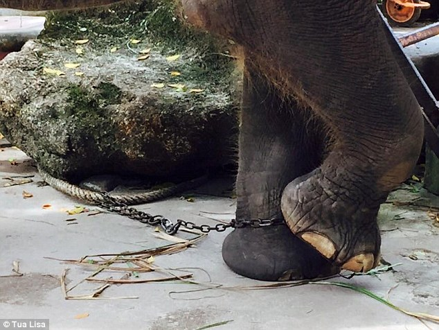 elefant-thai zoojpg
