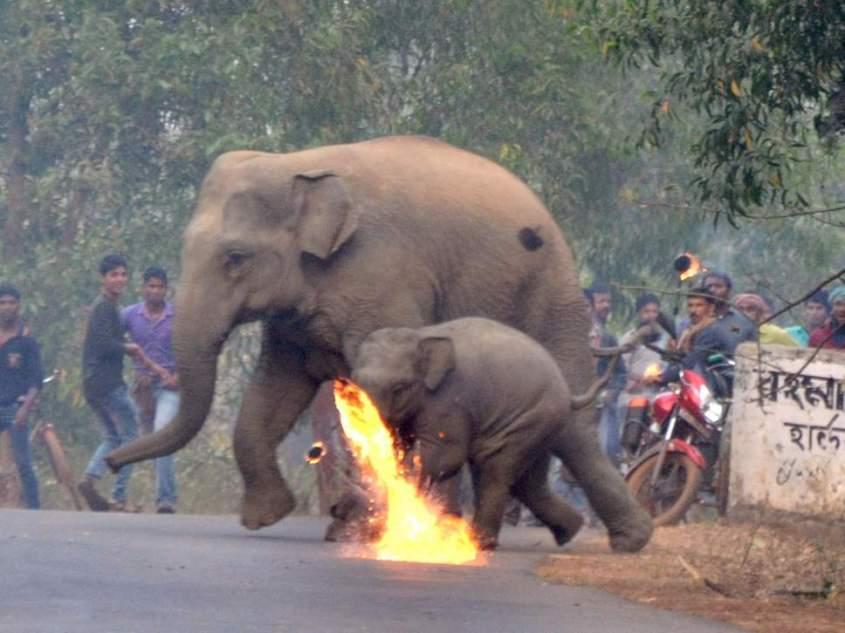 elephant-firebombed