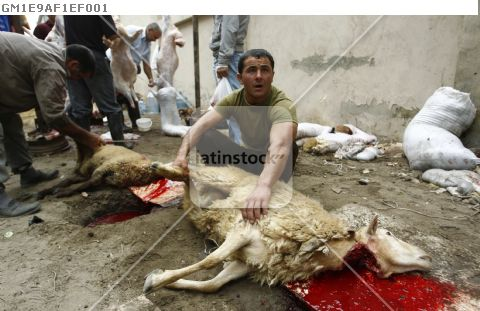 Butcher holds slaughtered sacrificial sheep during the religious holiday Kurban Bayram, also know as Eid al-Adha, in Baku