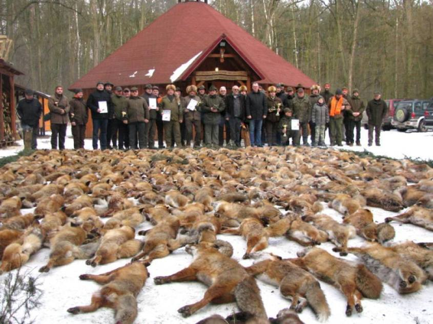 tote füchse bei jagd_n