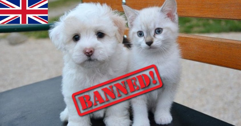 uk puppy kitten ban