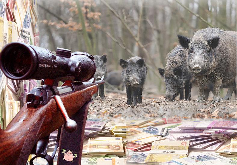 wildschweine auf gewehr jpg