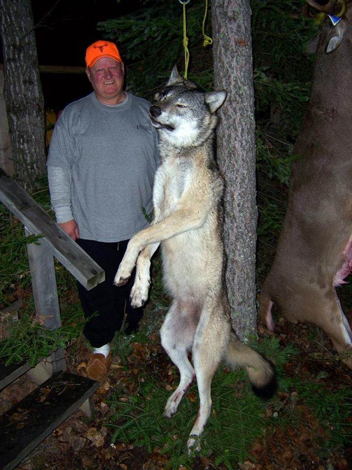Aufgehängter Wolf mit schönem Text_n
