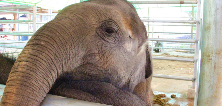 baby-elephant-NFA