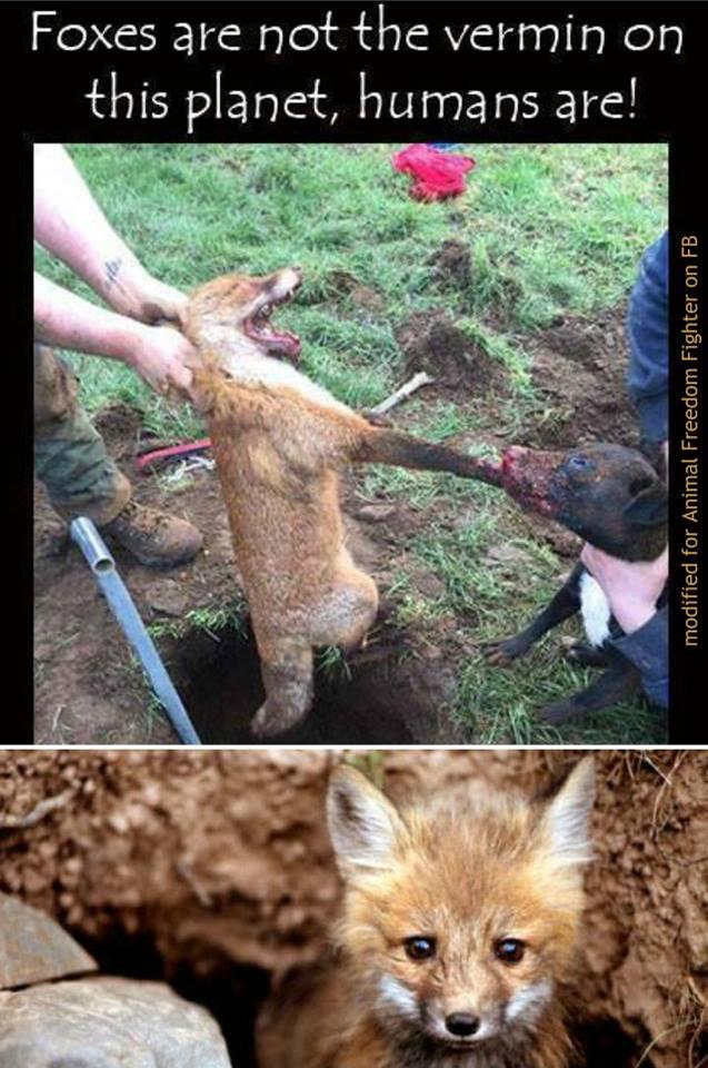 Baujagd mit Fuchs n