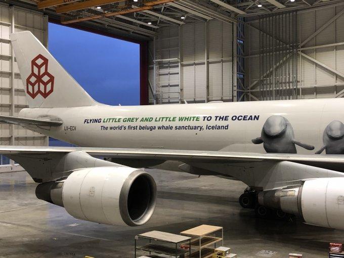 beluga jet full livery