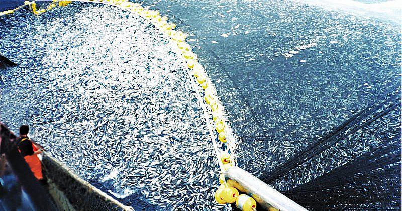 Überfischung in Chile-800x420