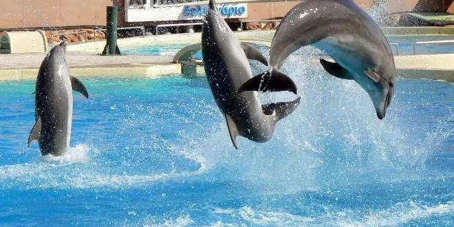 dolphins. Spata Athenjpg
