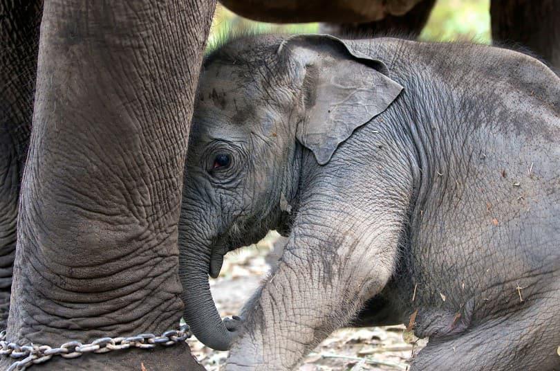 Elefanten Mama mit baby