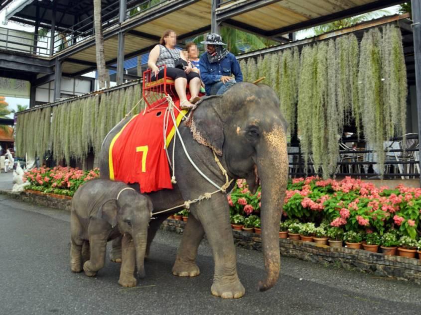 elefantenreiten_mit Baby dabei