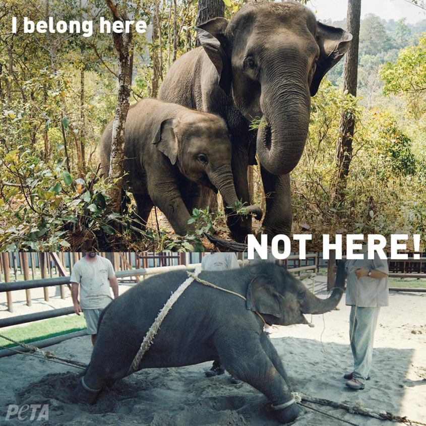 Elephant I belong here, not here