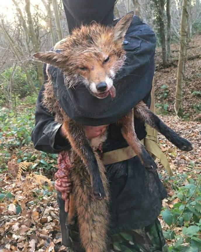 ermordeter Fuchs_n