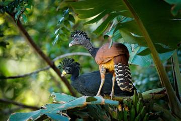 exotischer Vogel in Costa Rica