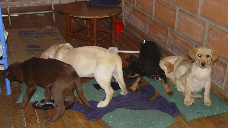 Hunde als Drogen Transporte jpg