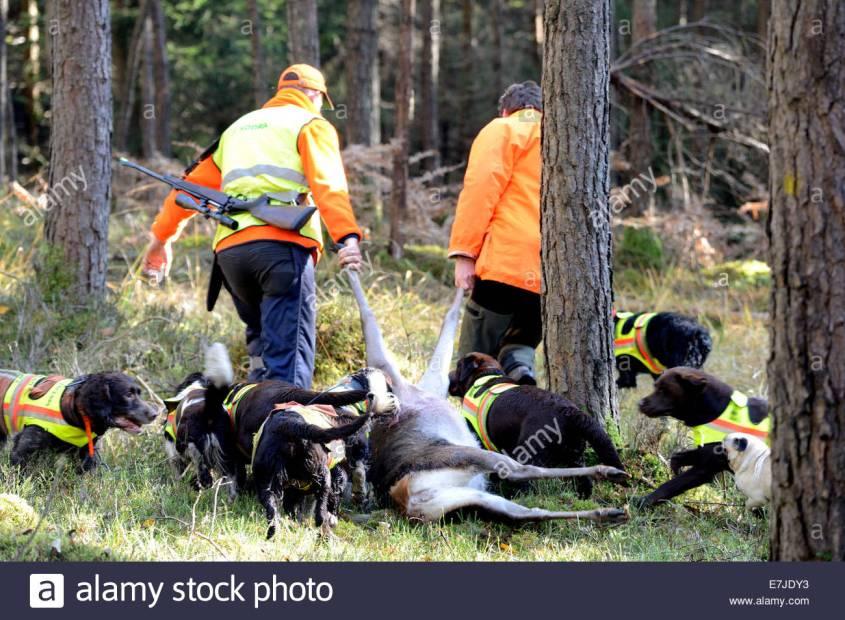Jäger mit Hunde und Beute bei treibjagd-prey-germany-E7JDY3