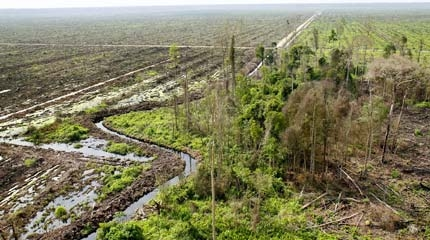 palm oil greenpeace uk