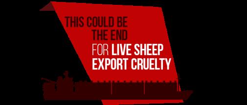 RSPCA Aus sheep