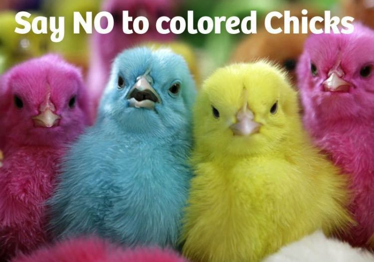 say NO to color chickenpg