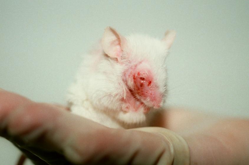 Tierversuche-Botox-PETA