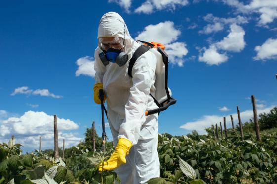 Plantation spraying