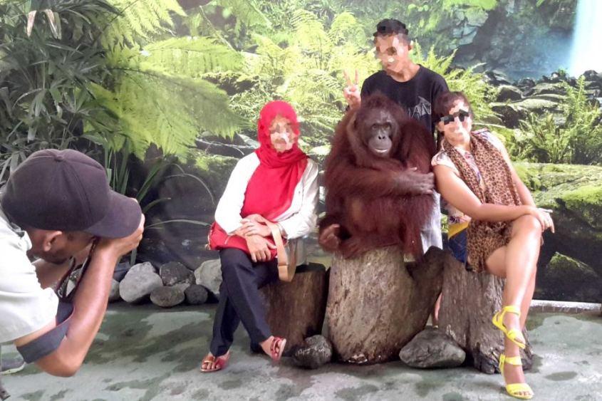 Blöde Touristen mit Orangutanspg