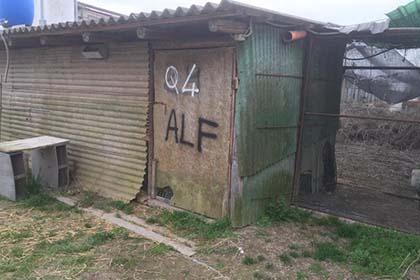 Italy_quail_befreit von ALF pg