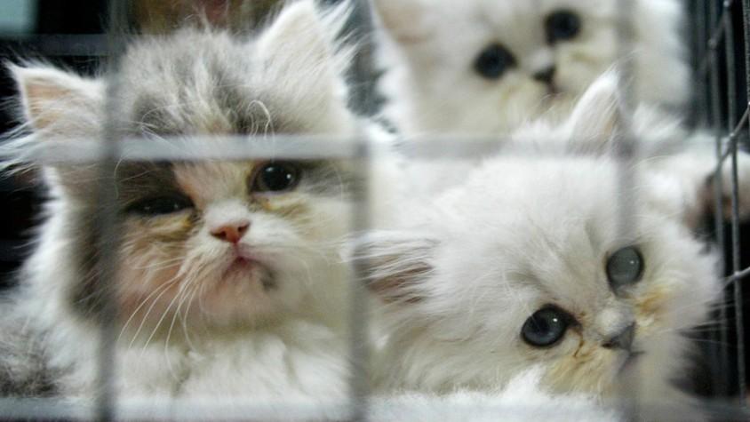 Kittenjpg
