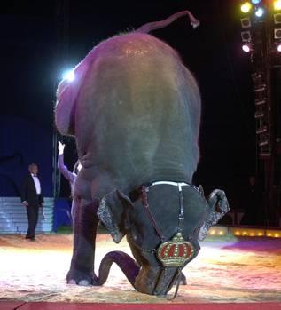 krone-elefant-kopfstand