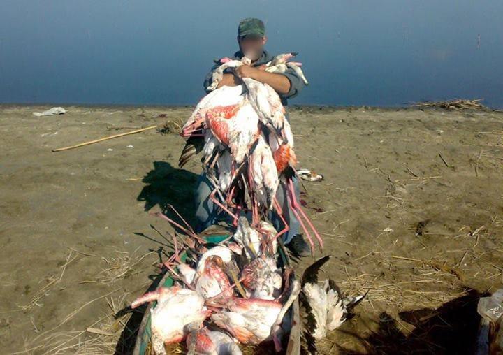 Libanese mit massakrierten Flamingosn