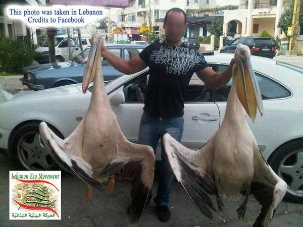 Libaneser mit ermordeten Störchejpg