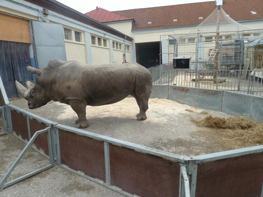 Nashorn-Tsavo Circus-Krone--